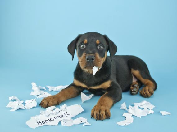 5 gute Ausreden für vergessene Hausaufgaben – Wir verraten sie!