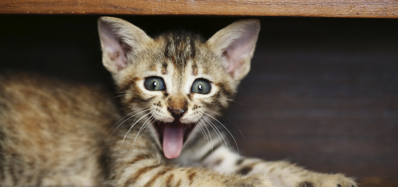 Lustige Katzen bringen gute Laune
