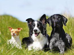Test: Welche Hunderasse passt zu mir?